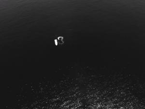 seagull_database_nir004_small
